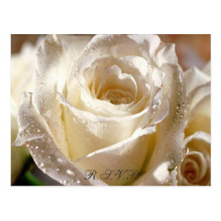 Dewy White Rose R.S.V.P. postcard