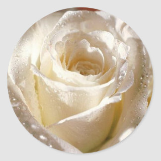 dewy white rose sticker