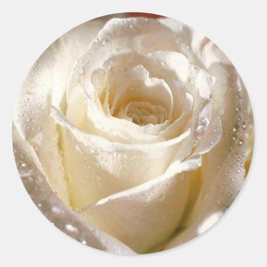 dewy white rose sticker