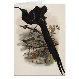 DG Elliot -Epimachus speciosus - Great Sickle-bill Greeting Card