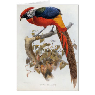 DG Elliot - Hybrid Pheasant Card