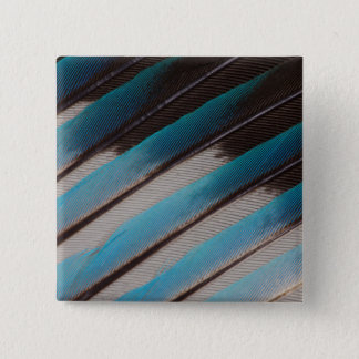Diagonal Blue-Bellied Roller Feather Design 15 Cm Square Badge