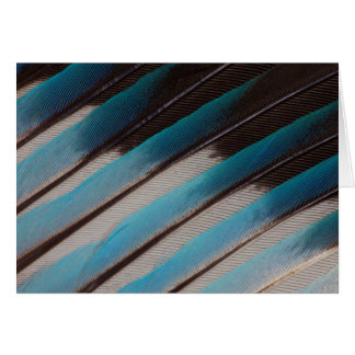 Diagonal Blue-Bellied Roller Feather Design Card