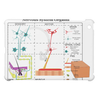 Diagram of Basic Nervous System Functions Case For The iPad Mini