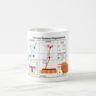 Diagram of Basic Nervous System Functions Mugs