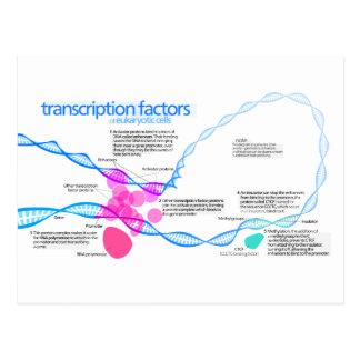 Diagram of gene transcription factors postcard