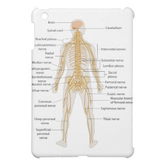Diagram of the Human Body s Nervous System Cover For The iPad Mini