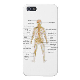 Diagram of the Human Body s Nervous System iPhone 5 Cases