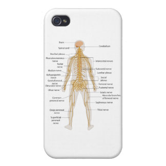 Diagram of the Human Body's Nervous System Case For iPhone 4