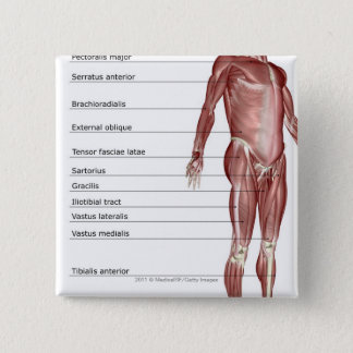 Diagram of the muscular system 15 cm square badge