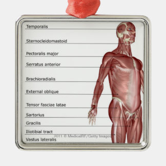 Diagram of the muscular system Silver-Colored square decoration