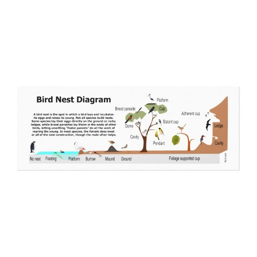 Diagram of Various Bird Nests Gallery Wrap Canvas