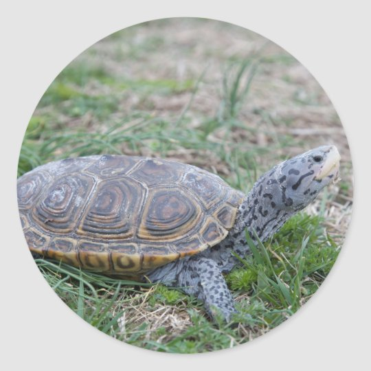 diamondback terrapin turtle stickers