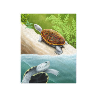 Diamondback Terrapin Turtles Wrapped Canvas Stretched Canvas Prints