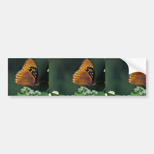 Diana fritillary on Wild quinine Bumper Sticker