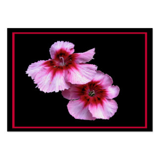 Dianthus Blossoms ATC Pack Of Chubby Business Cards
