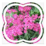 Dianthus Perennial Invitation