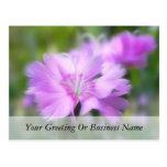 Dianthus Plumarius Flower Postcard
