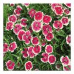 Dianthus White Pink Custom Invite