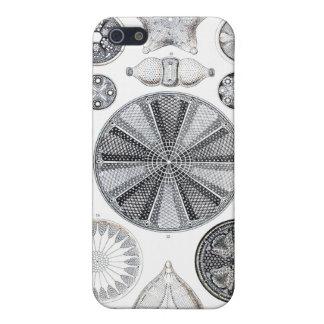 diatom iphone 4 case