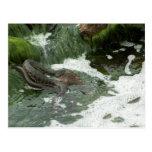 Dice snake eating fish post card