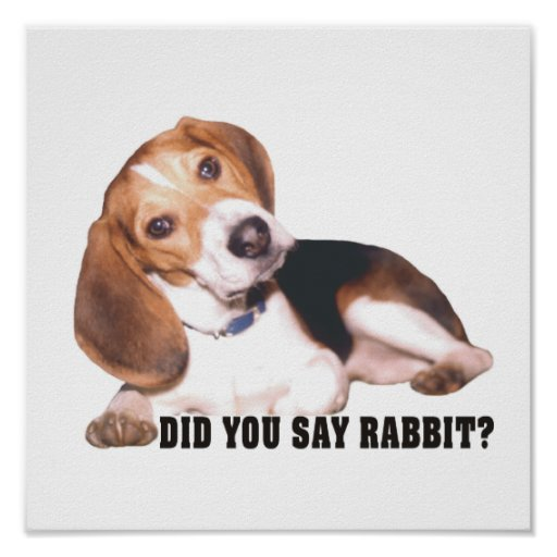 Did you Say Rabbit?  Beagle Poster