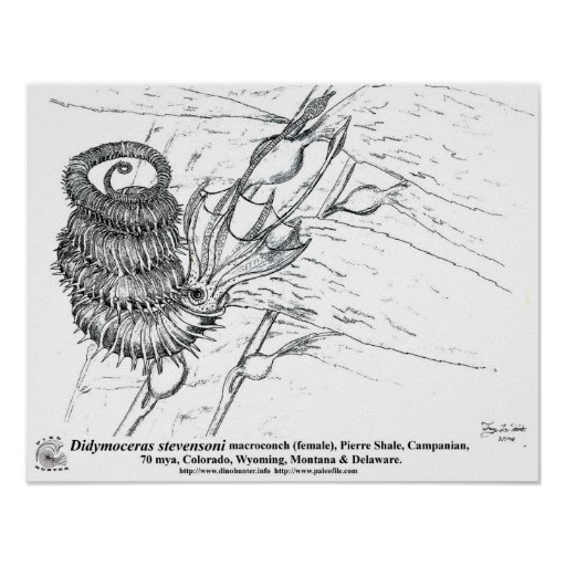 Didymoceras stevensoni poster