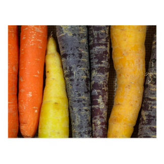 Different colored carrots postcard