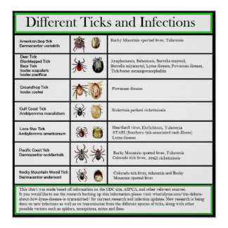 Different Ticks and Infections Chart Poster