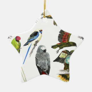 Different types of parrot gift for the parrot love ceramic star decoration