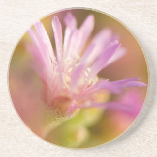 Diffused Image Of A Colorful Succulent Flower Beverage Coasters