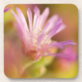 Diffused Image Of A Colorful Succulent Flower Coaster