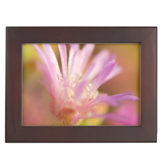 Diffused Image Of A Colorful Succulent Flower Keepsake Box