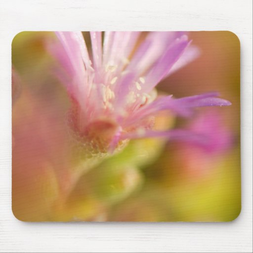 Diffused Image Of A Colorful Succulent Flower Mousepad