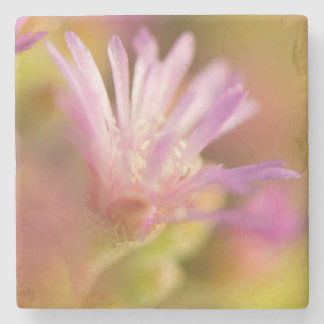Diffused Image Of A Colorful Succulent Flower Stone Coaster