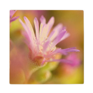 Diffused Image Of A Colorful Succulent Flower Wood Coaster