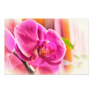 Diffused Orchid Photo Print