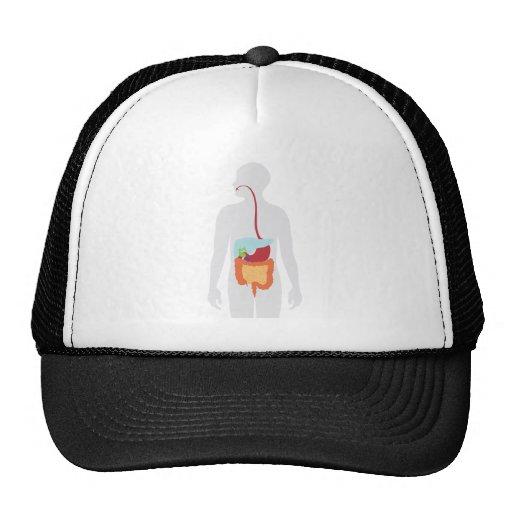 Digestive System Hat