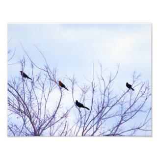 Digital Oil Painting Birds on A Tree Print