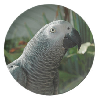 Dignified African Grey Parrot Plate