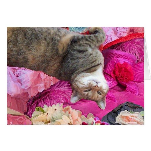 Dilemma of Princess Tatus Cat Greeting Cards