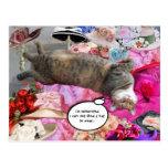 Dilemma of Princess Tatus Cat Postcards