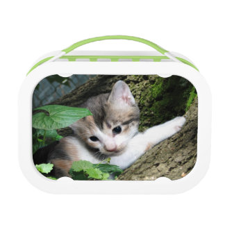Dilute calico kitten lunch box