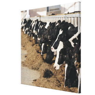 Diminishing Perspective of Cow's Heads Grazing Canvas Print