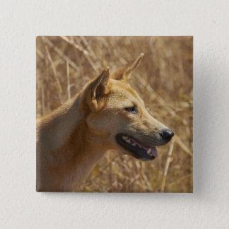 Dingo (Canis lupus dingo) 15 Cm Square Badge