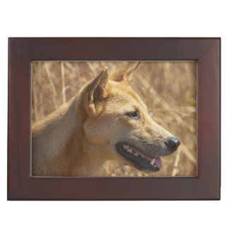 Dingo (Canis lupus dingo) Keepsake Box
