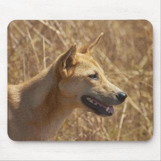 Dingo (Canis lupus dingo) Mouse Mat