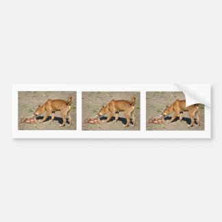 Dingo eating poultry bumper sticker