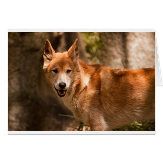 Dingo greetings card