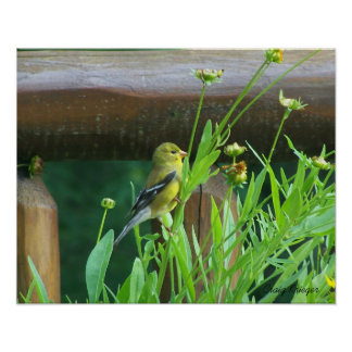 Dining Goldfinch Print
